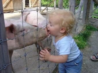 Gripe porcina: Un delirio que produce ganancias a las farmacéuticas